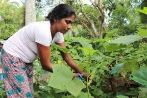 Dhammika now shares her gardening skills with others.